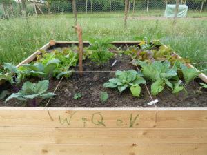"""und!!!! schon wächst das """"erste Gemüse"""" guten Appetit......."""