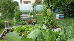 ja, jetzt wächst das Gemüse und alles Andere, ohne Ende